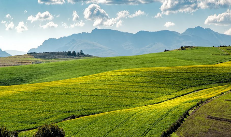 South Africa might be on track for another good crop harvest in the 2020/21 production season