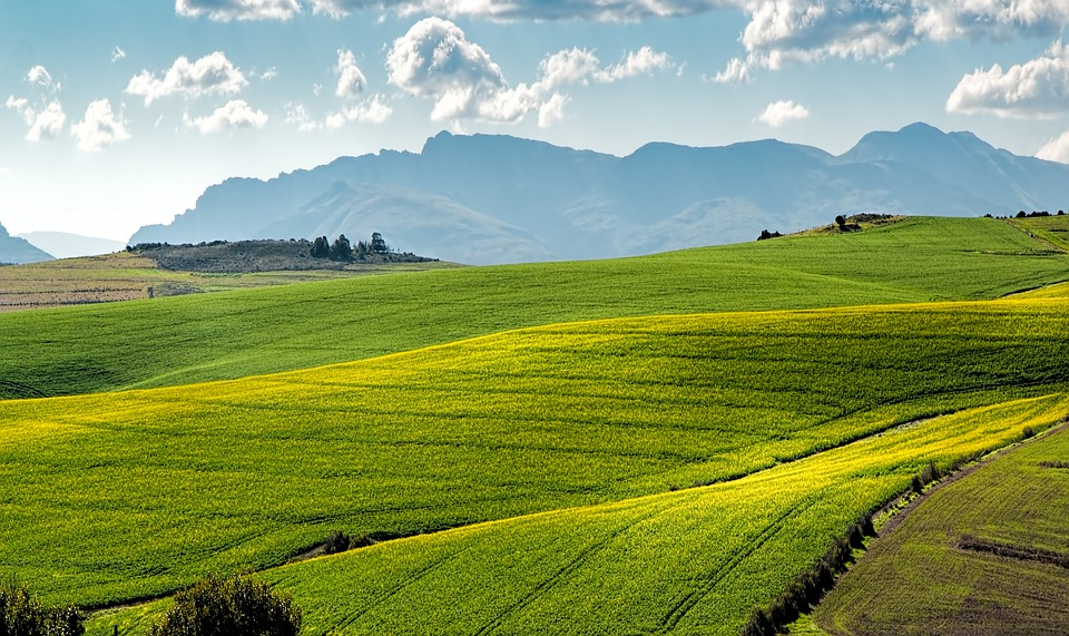 What do young South Africans think about land reform?