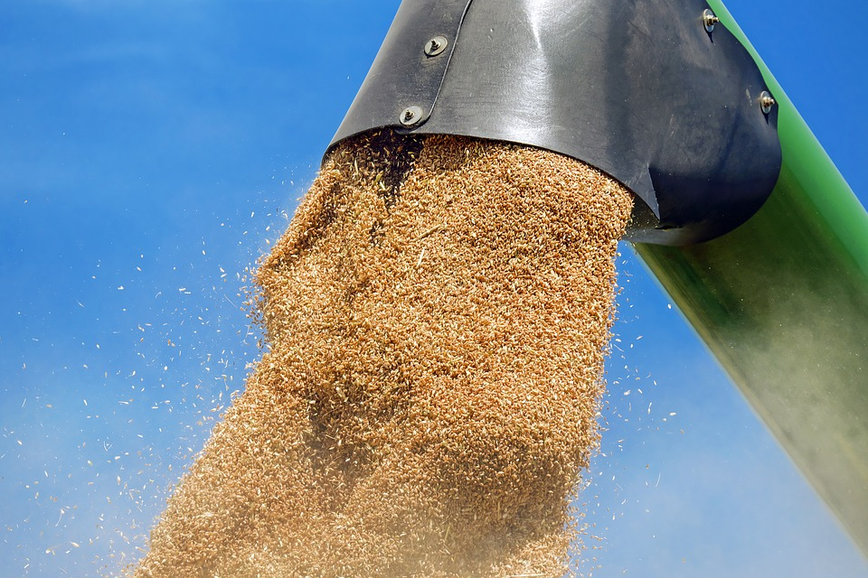 Here We Go Again, More Delays in South Africa's Wheat Import Tariff Publication