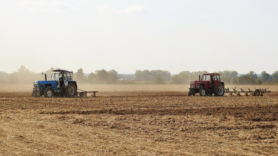 Better rainfall and late planting boosts SA summer crop harvest forecast