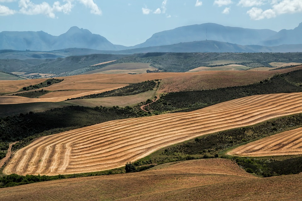SA agriculture's déjà vu moment, starring drought and animal disease