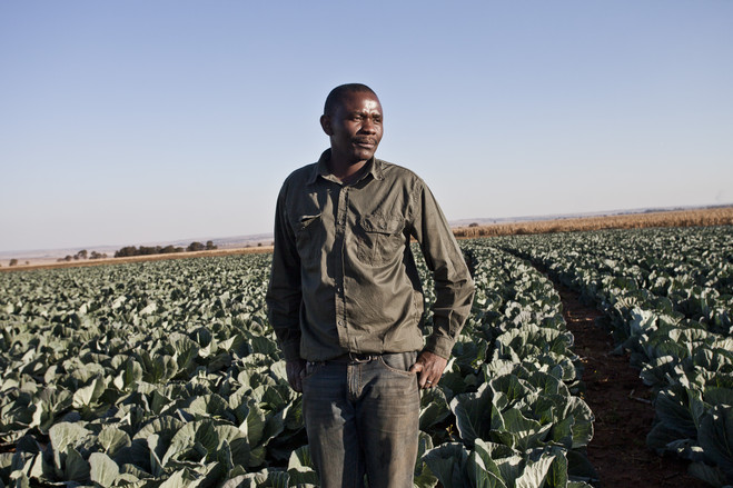The relative contribution of black farmers to South Africa's agricultural production
