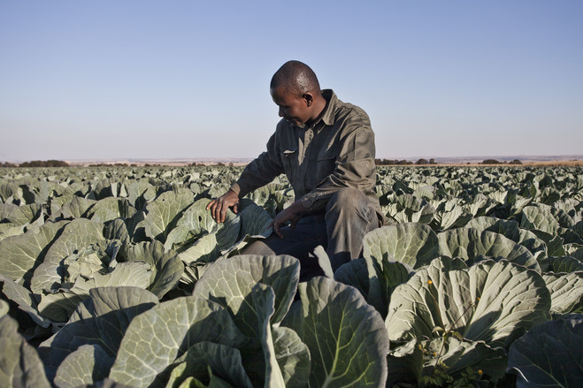 What's needed for South Africa's agriculture to boost jobs?