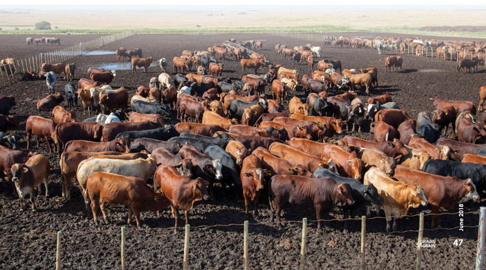 Drought and foot-and-mouth disease weigh on SA agriculture exports