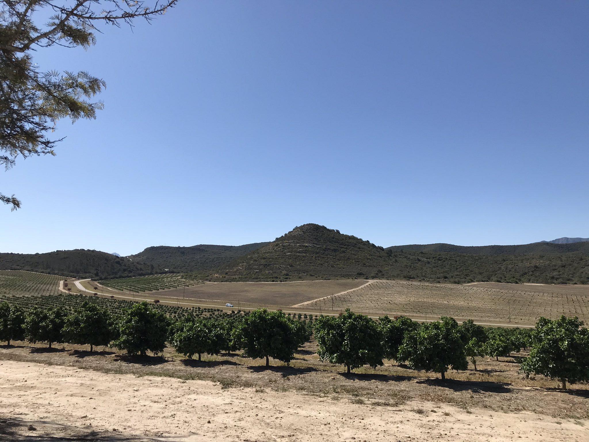 Amid the grim news, SA agriculture bears fruit