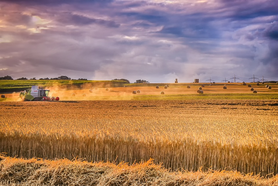 Positive prospects for the 2020/21 global grains harvest