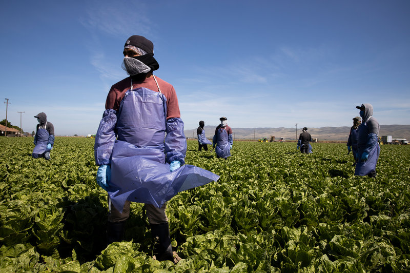 SA agricultural employment held up in Q3, 2020, but there are disparities across provinces