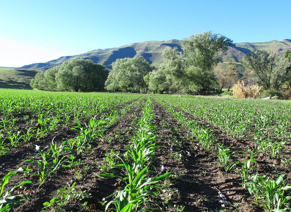 How sub-Saharan Africa can rethink its approach to agriculture after Covid-19