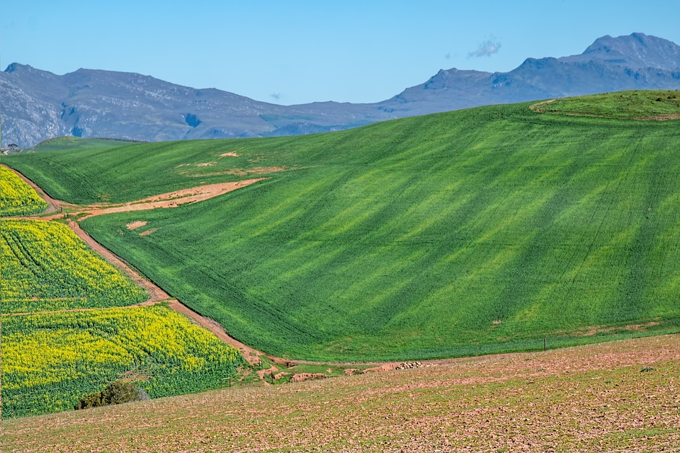 Reflections on South Africa's 2021/22 winter crop production prospects