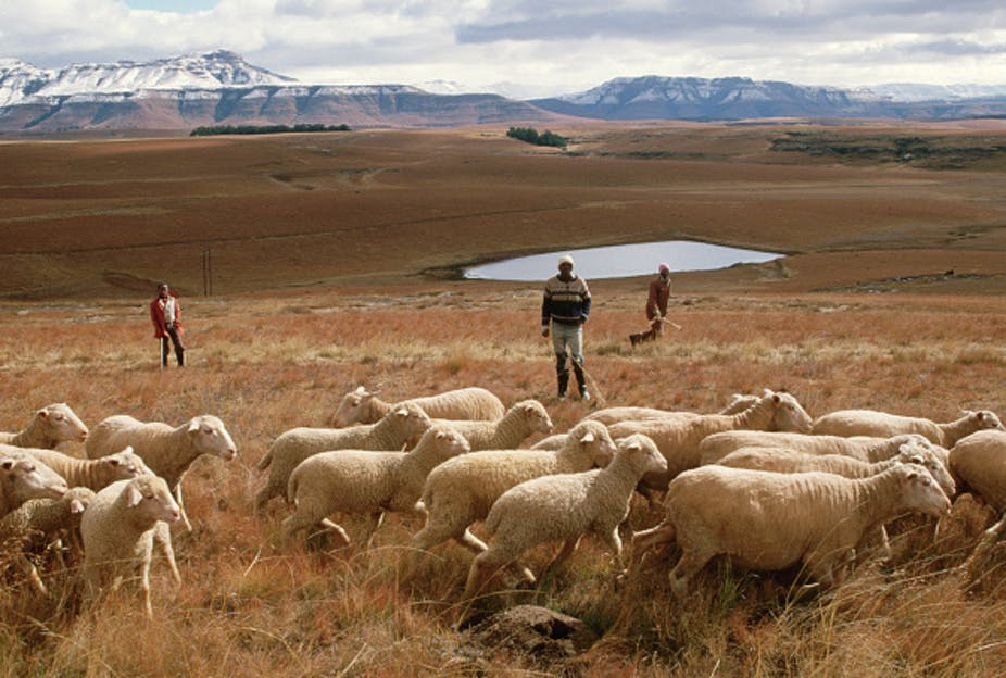 How a land reform agency could break South Africa's land redistribution deadlock