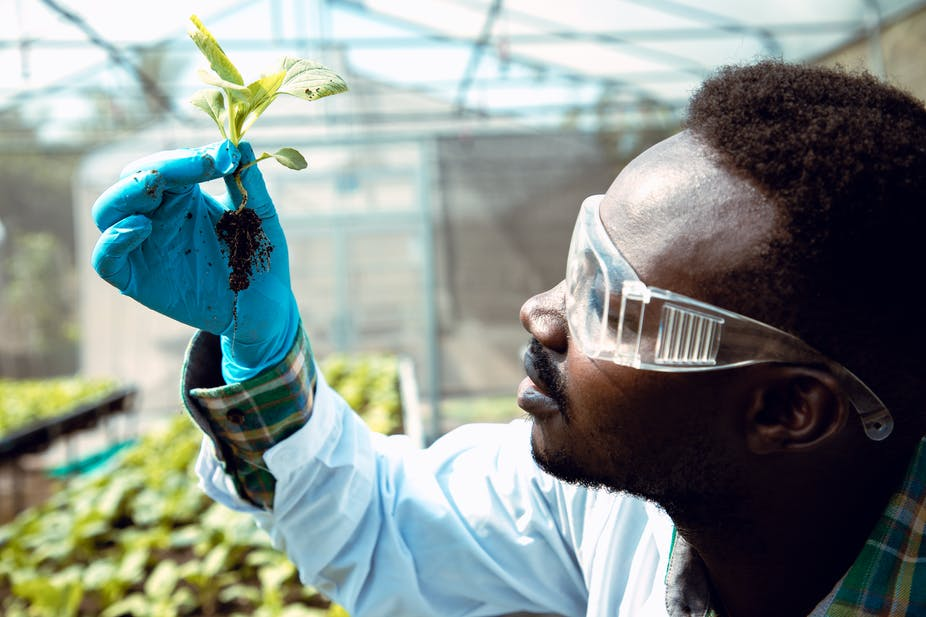 Stronger agricultural R&D systems will enable agriculture to power Africa's transformation